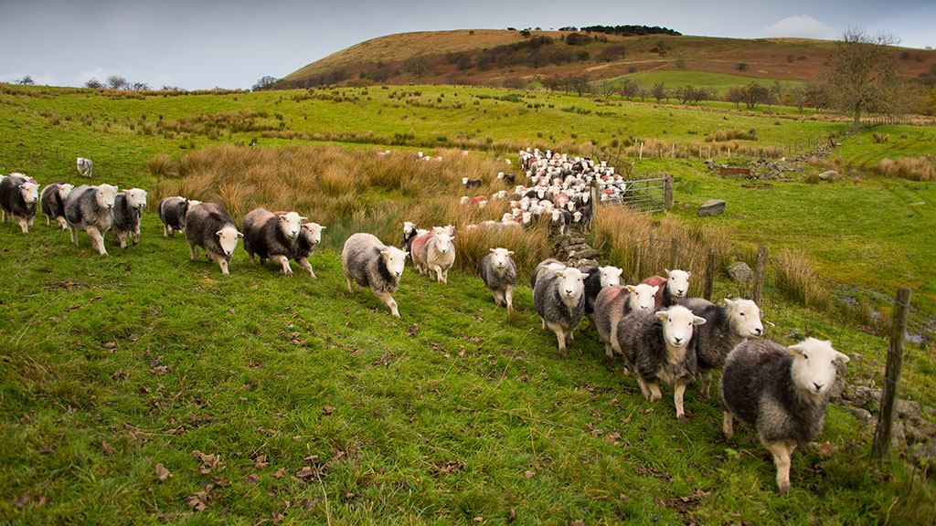 Upland alarm as family farmers fear they are being pushed out from the hills