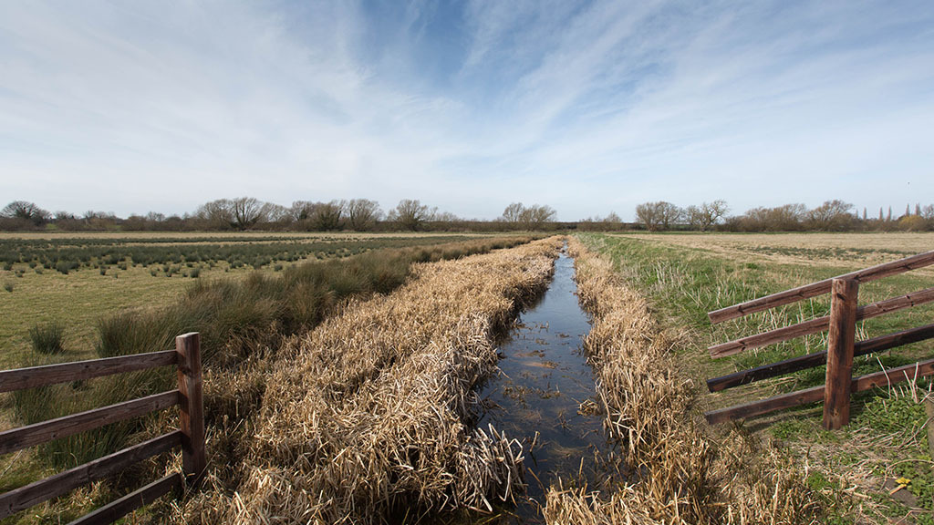 Anger as WG commits to introduce agricultural water pollution law in Clean Air Plan