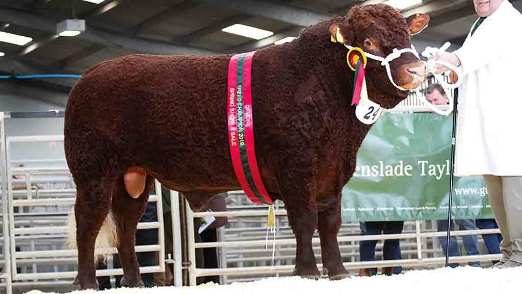 The show champion, Colesden Alexander, made 2,500gns.