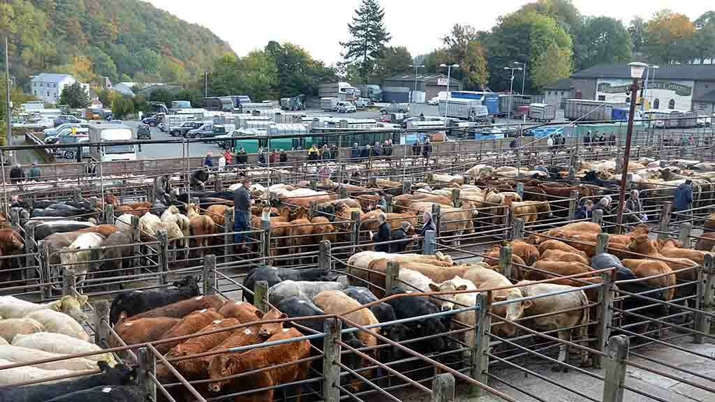 VIDEO: The value of auction marts in the modern UK farming industry