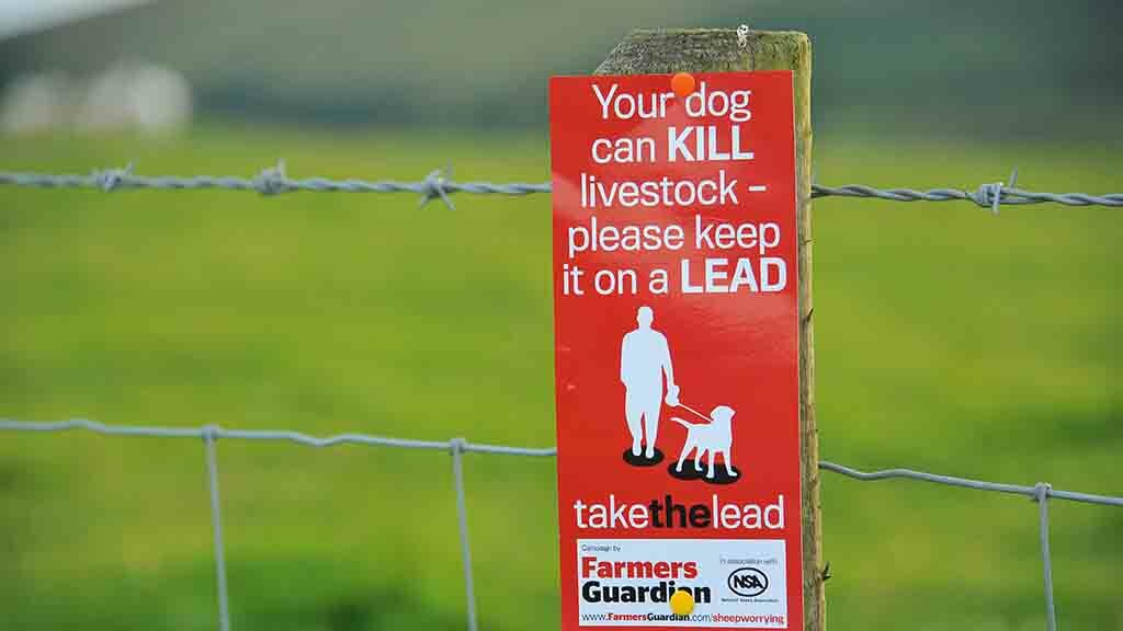 Sheep farmer visits dog walking spots for proactive talks on livestock worrying