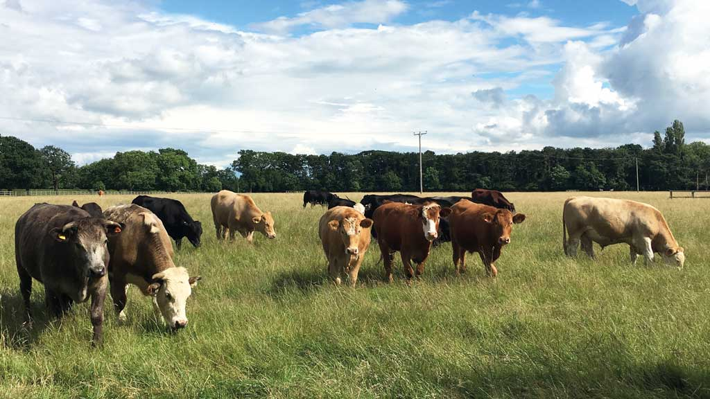 How UK farmers can get the best out of their parasite control