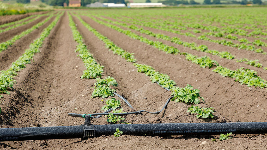 Growers must formalise trickle irrigation use