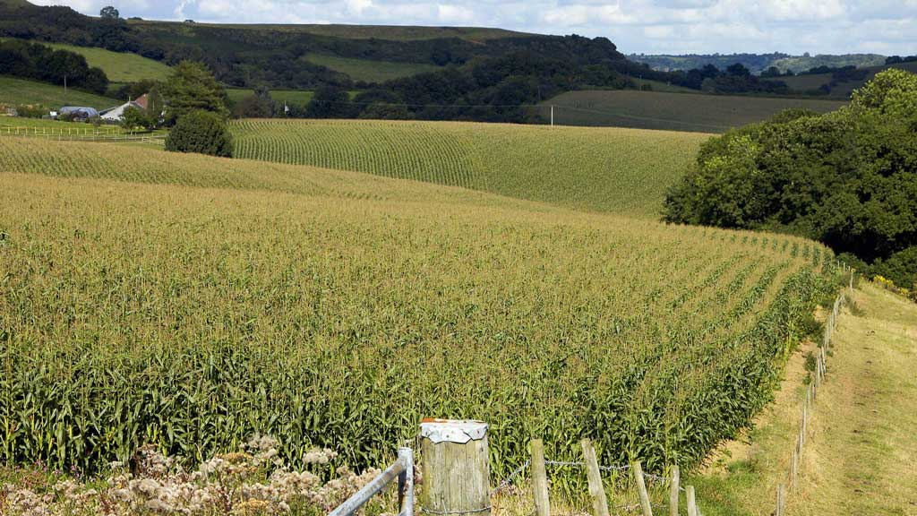 Maize will need the right conditions to achieve its potential.