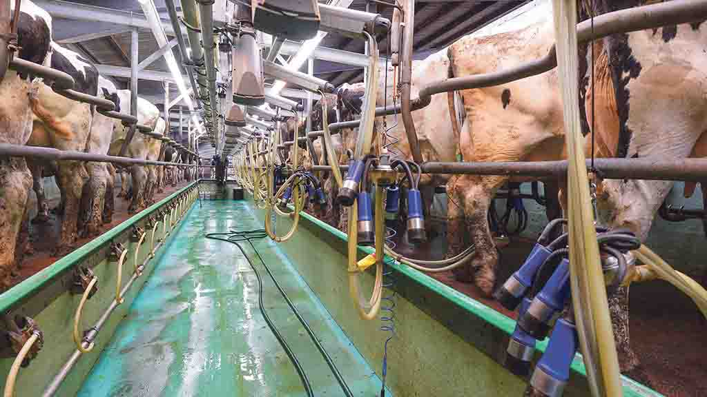 Forage prices hit UK dairy farm profits in 2017/18 after tough winter period