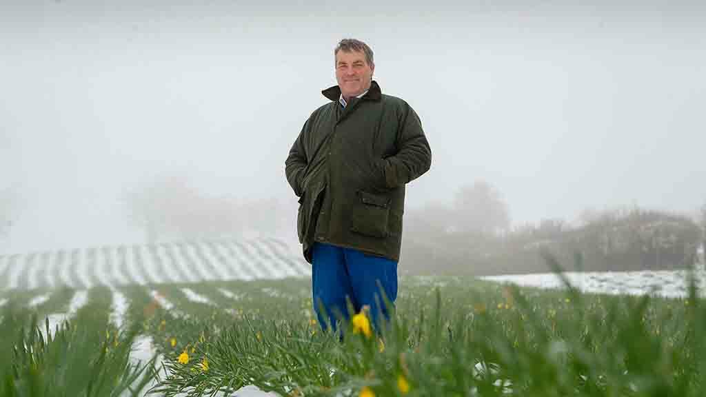Farm profile: Why one Welsh hill farmer is growing daffodils for Alzheimer's research