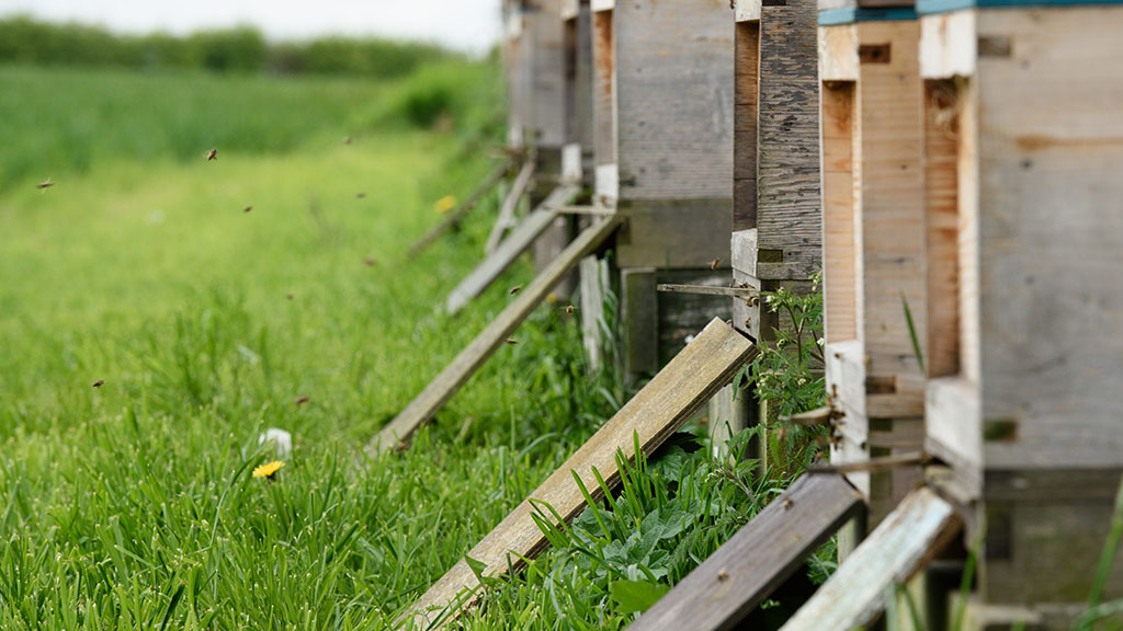 'Pollinators are an essential part of food production and our environment'