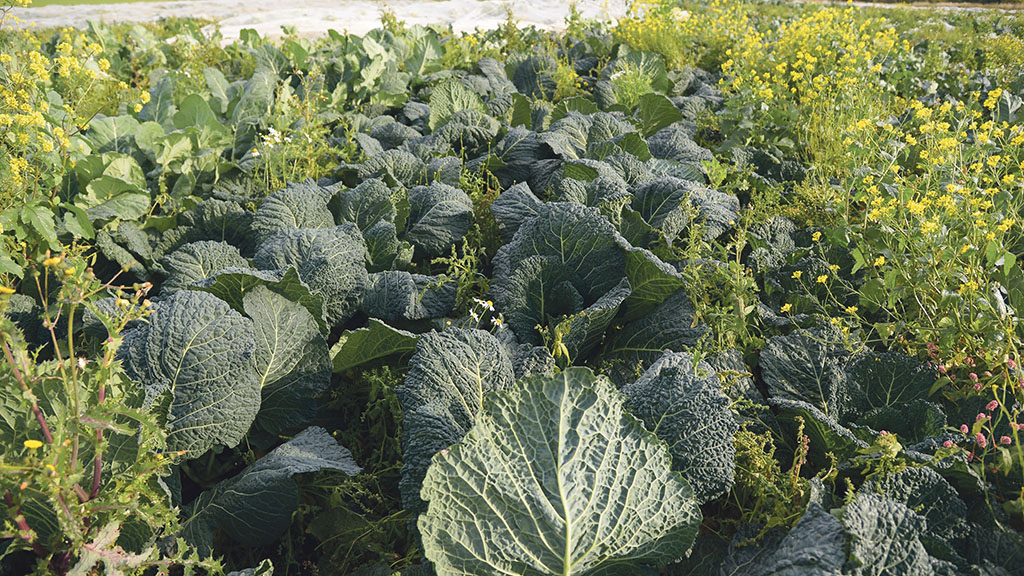 Defra data shows growth in UKorganicproducers in spite of uncertainty