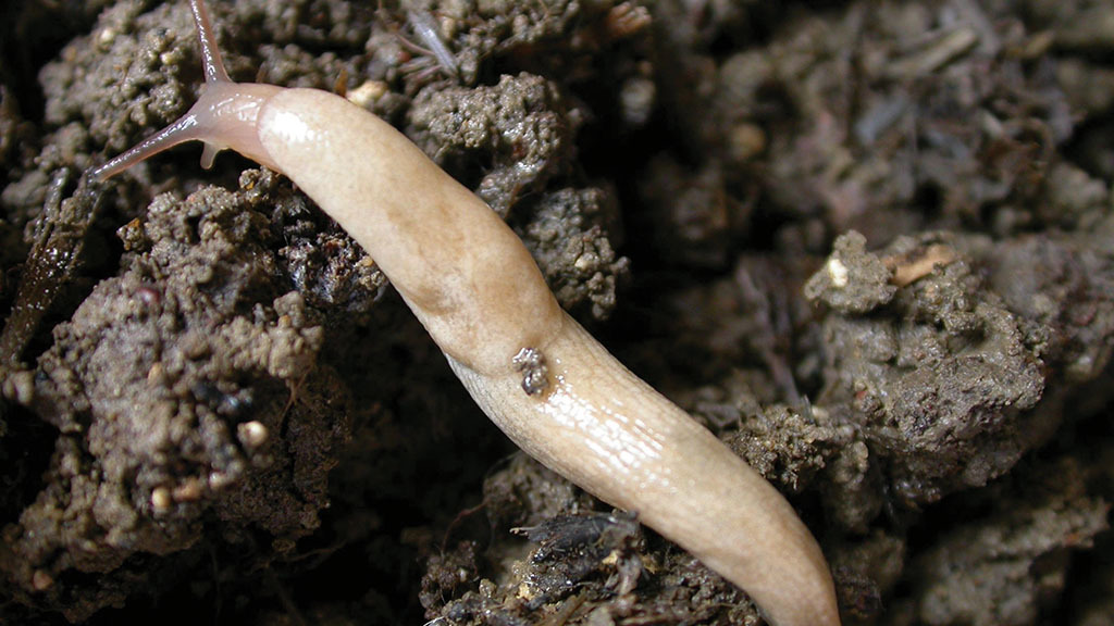 The changing face of slug control: Growers urged to consider alternatives