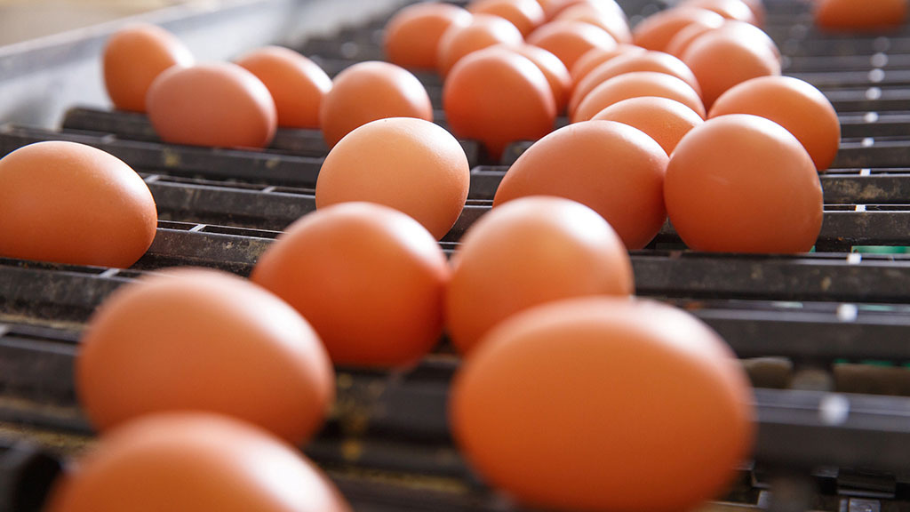Global Ag View: New Zealand faces egg shortage as demand soars
