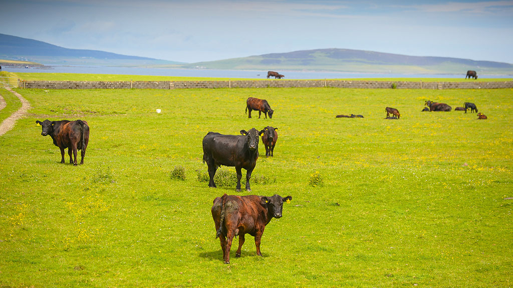 NFUS pushes for Scottish schedule in UK Ag Bill to provide certainty for farmers