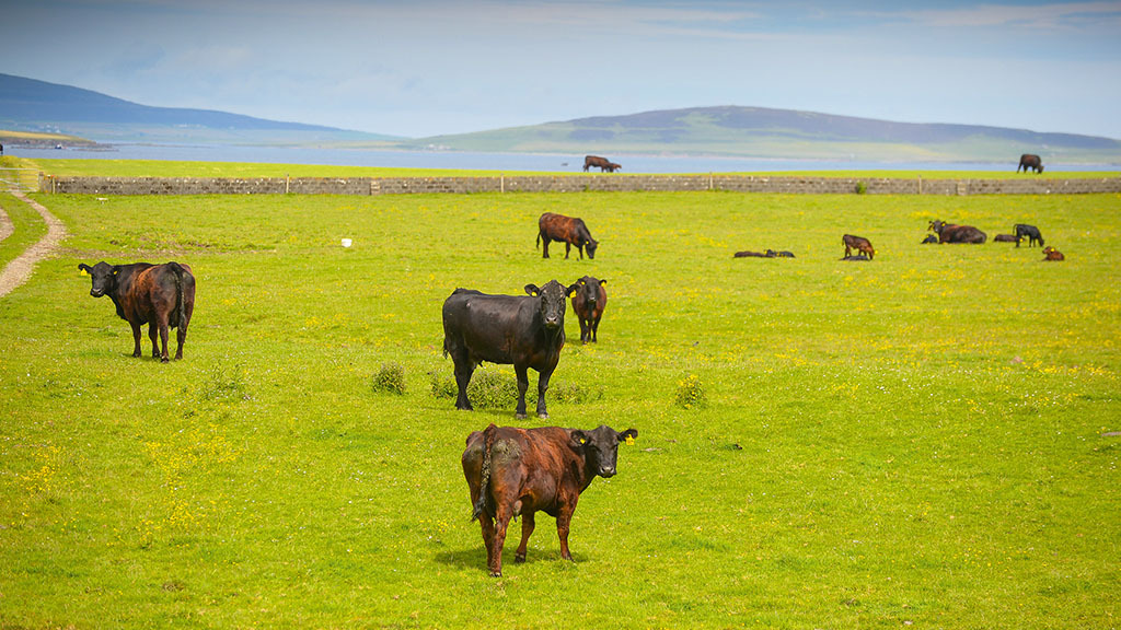 Scottish farmers offered interest free loans as no-deal Brexit edges closer