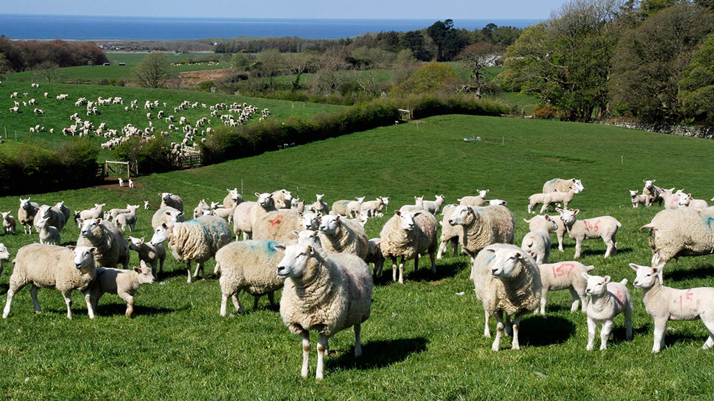 NFU Cymru reiterates call for red meat levy repatriation after Ag Bill falls