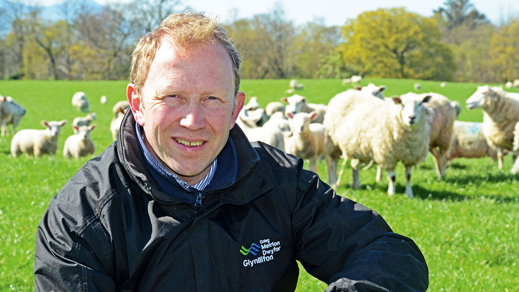 College set to welcome NSA Welsh Sheep: Everything you need to know