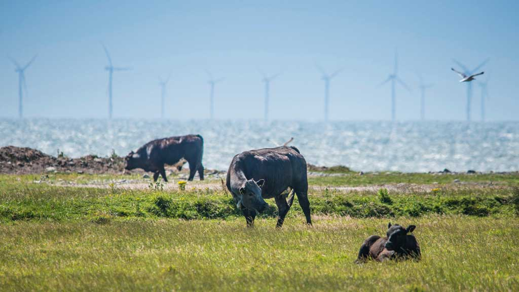 Tackling climate change: How UK farming can reduce its footprint