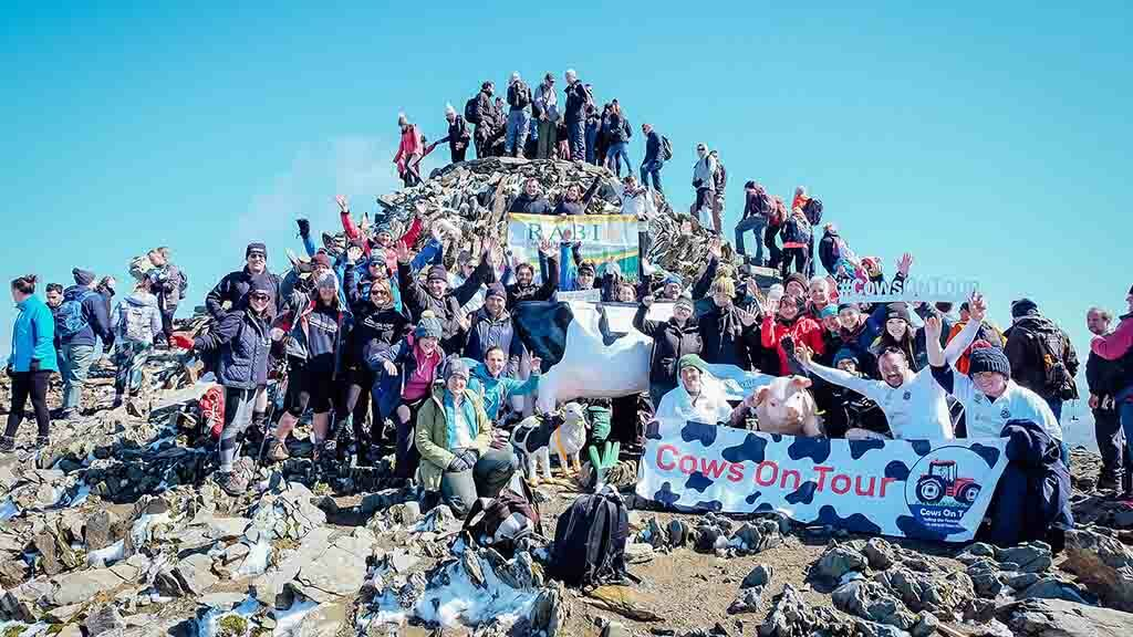 Mooving on up! Charity trek sees life-size cow carried to Snowdon summit