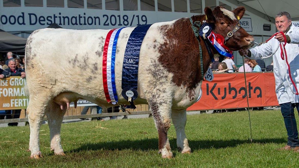 Inter-breed beef champion, Ricketstown Lovely 191 from David Duncan McDowell, Co. Down.