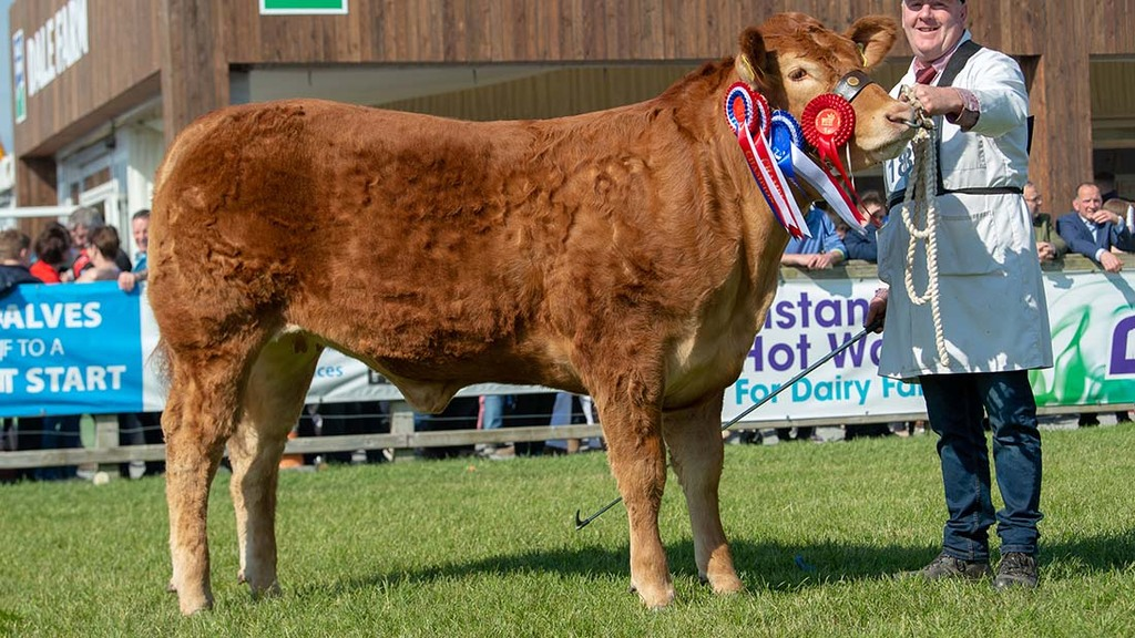 Reserve inter-breed beef champion, Millbrook Nelenya from William Smith, Co. Meath.