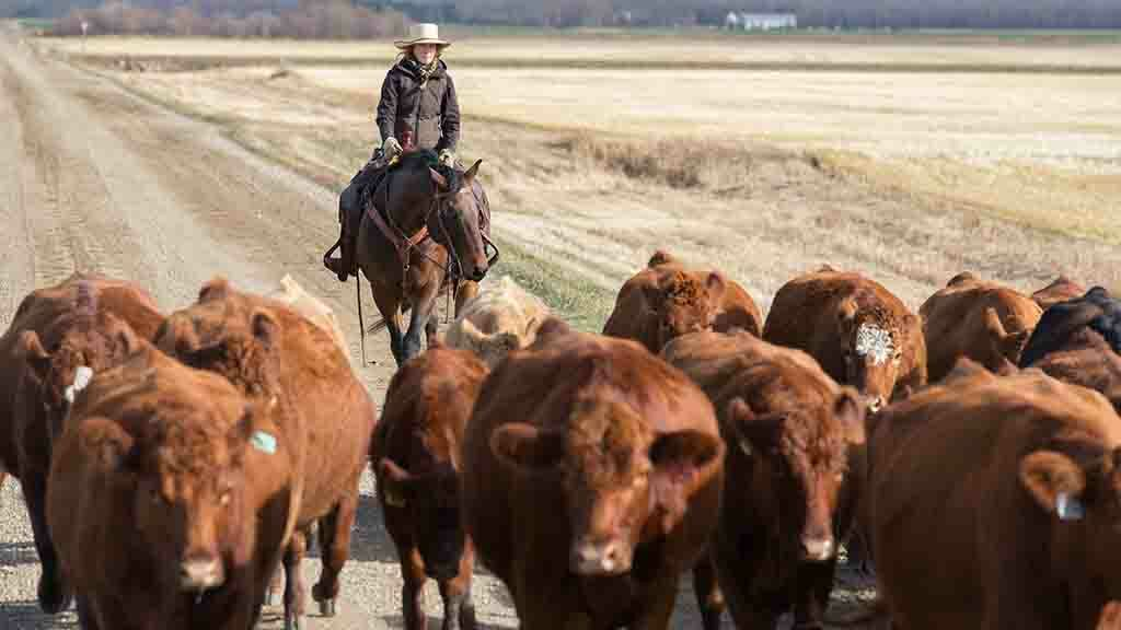 Global Ag View: China bans Canadian semen imports amid ongoing tensions