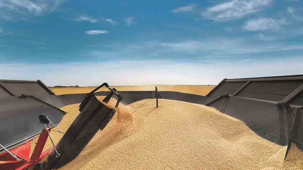 An eye on the grain market: UK markets follow the EU and US lower