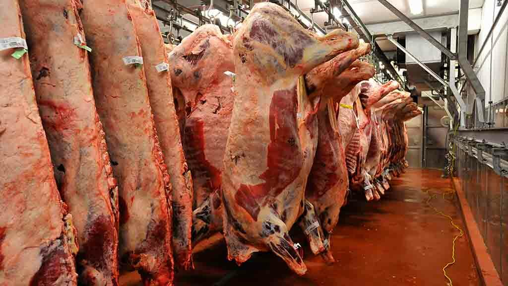Prime cattle prices continue to climb in the UK as supplies tighten