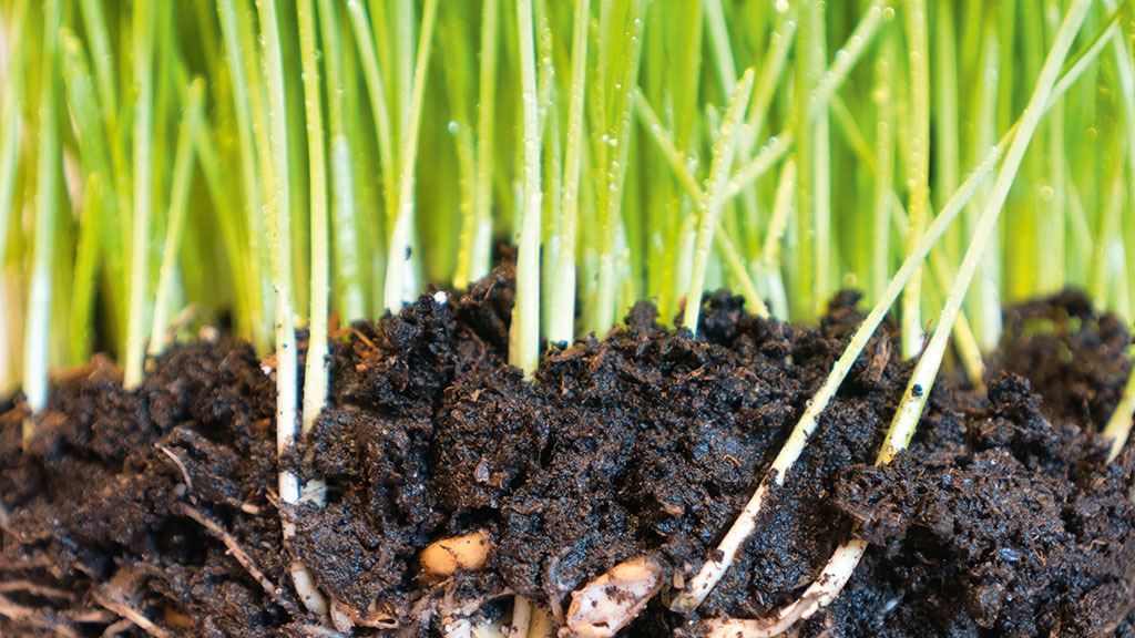 Cereals Preview: Growers look for additional solutions to boost crop performance