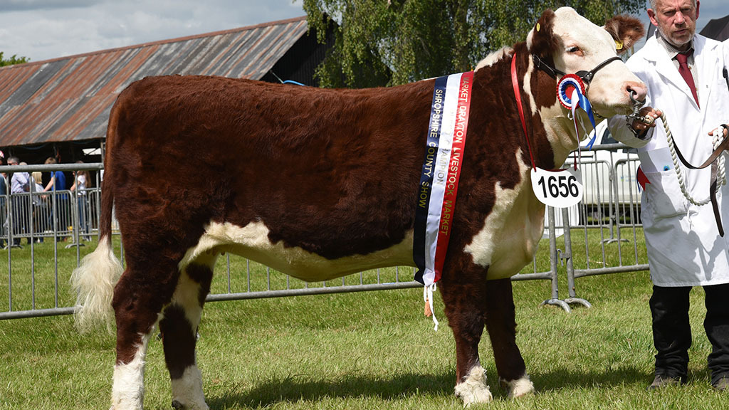 Reserve native champion, Hollyvale 1 June 3 from A. and P. Massey, Bury.