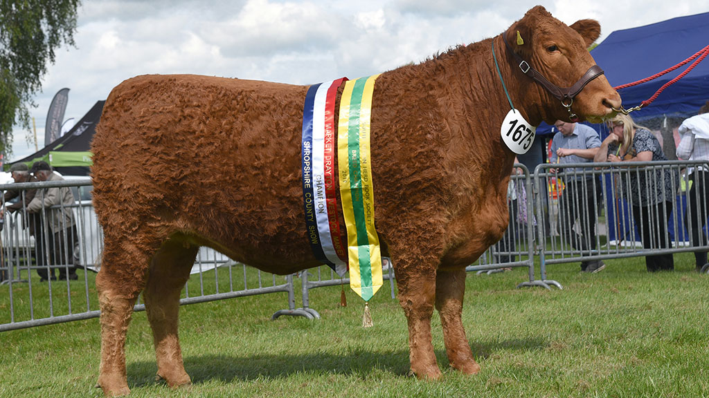 Native South Devon takes inter-breed beef honours