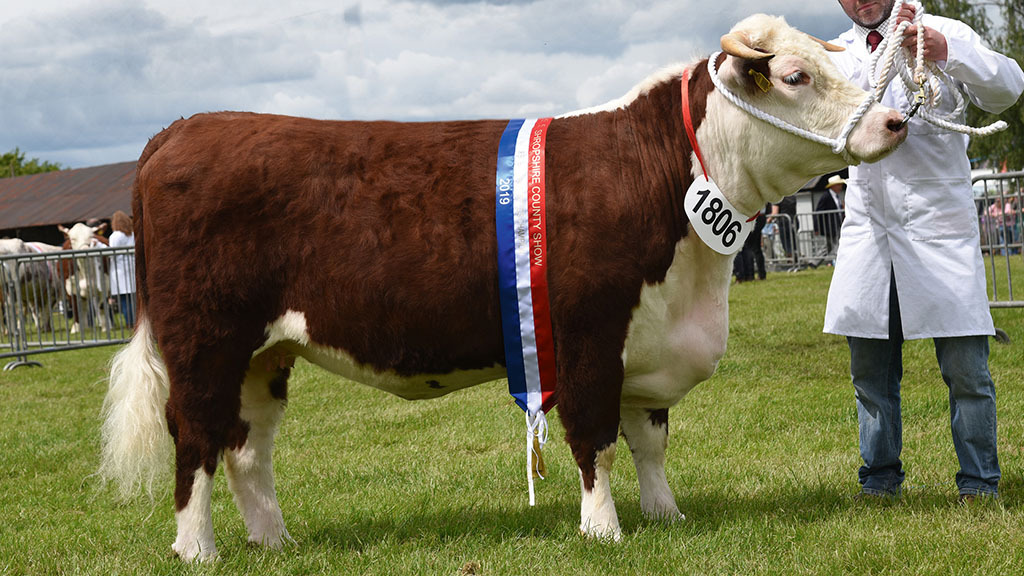 The rare and minority breed champion, Hockerwood Lucy from P. and E. Lynn, Nottinghamshire.