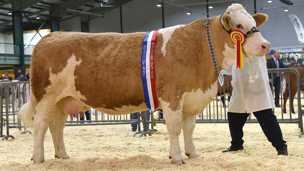 Beef champion - Kennox Diva's Gena, from David Donnelly, Ashbourne