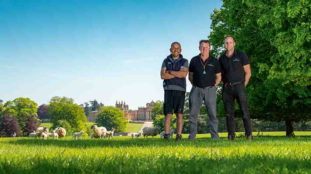 Backbone of Britain: Blenheim Palace links with farming charity to welcome disabled adults to industry