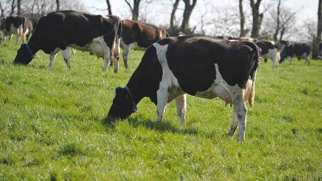 Understand ketosis status to maximise herd fertility