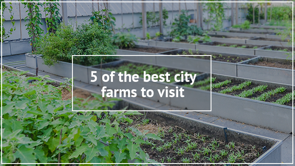 5 of the best city farms to take your kids to