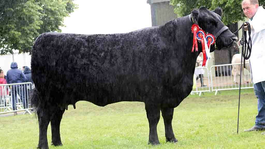 Natives lead the way as Aberdeen-Angus tops beef line up