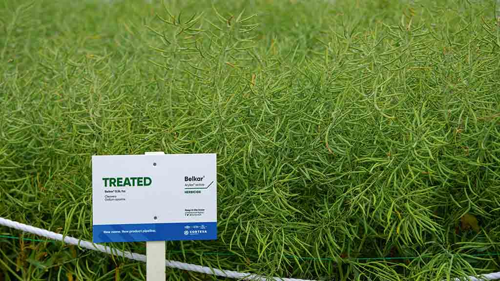 Cereals 2019: Reducing risk in OSR crops