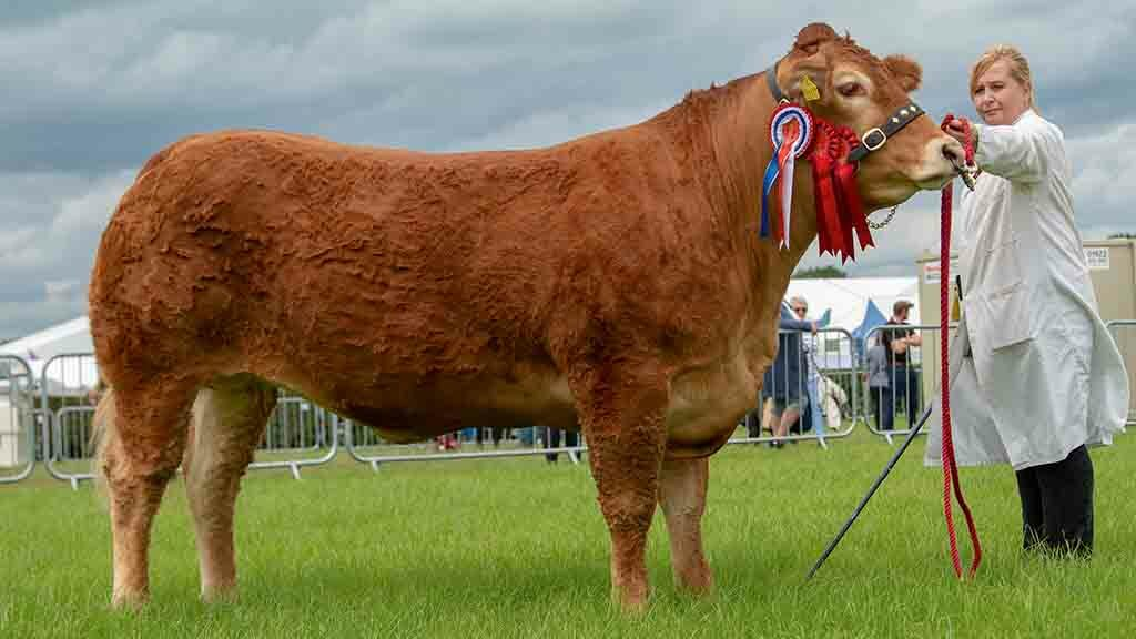 Supreme beef champion, Dinmore Madonna from Paul Dawes, Hereford.