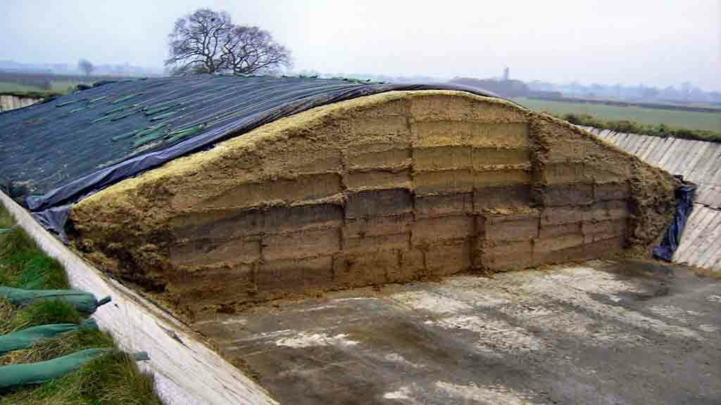 Grass and forage special: Developments in silage inoculants