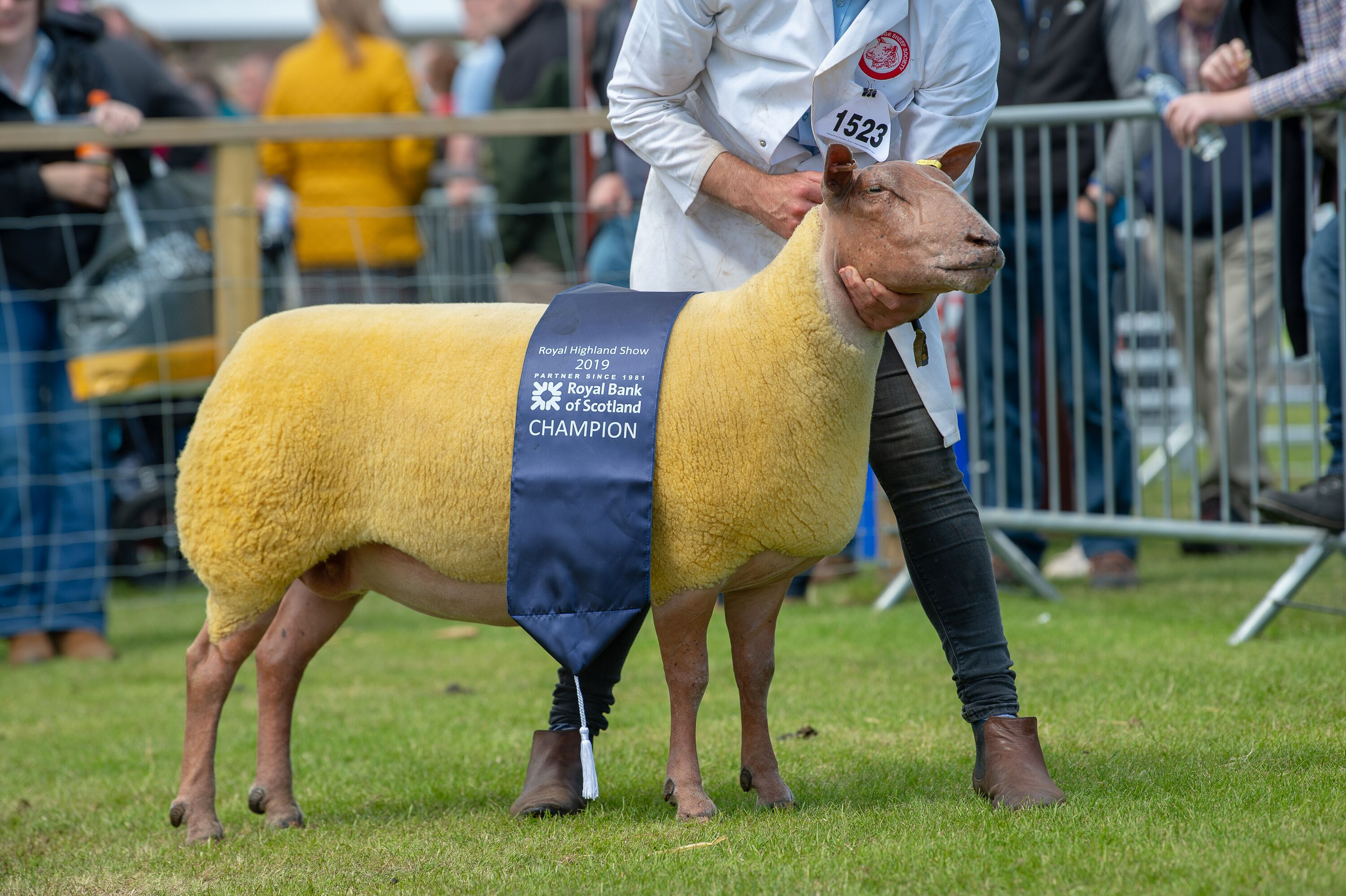 Rouge champion a ewe from Percy Tait