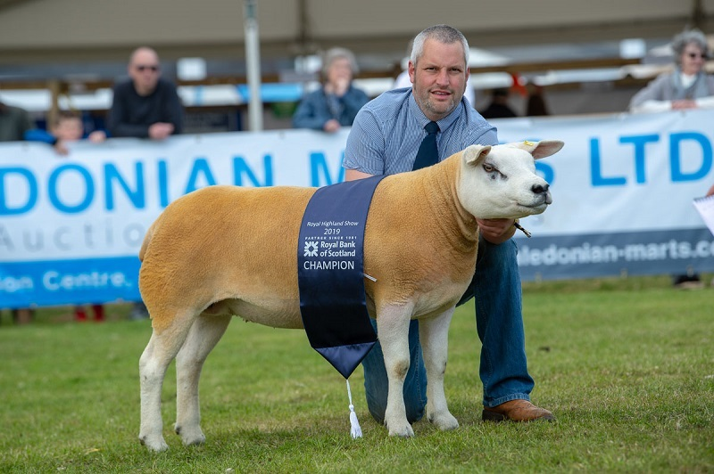 Texel and inter-breed champion from the MacTaggart family's Douganhill flock