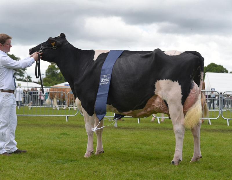 Holstein crowned supreme in Royal Highland Show dairy rings