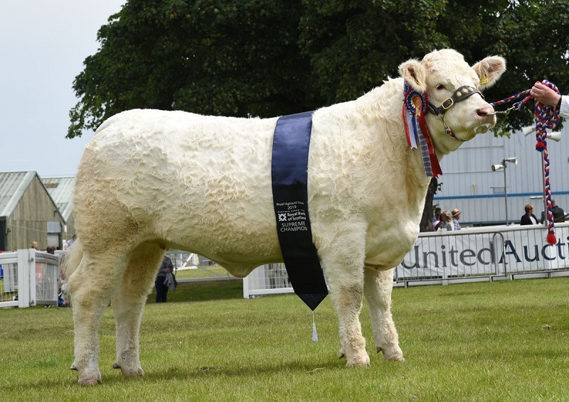 Inter-breed beef champion, Balthayock Nessie from Major Walter, Perth