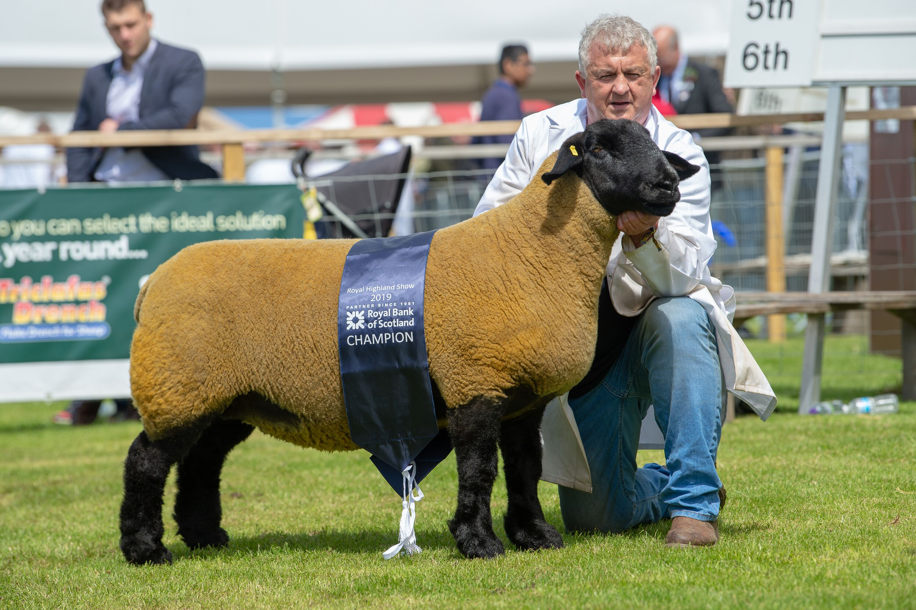 Suffolk champion a shearling ewe from Stewart Craft
