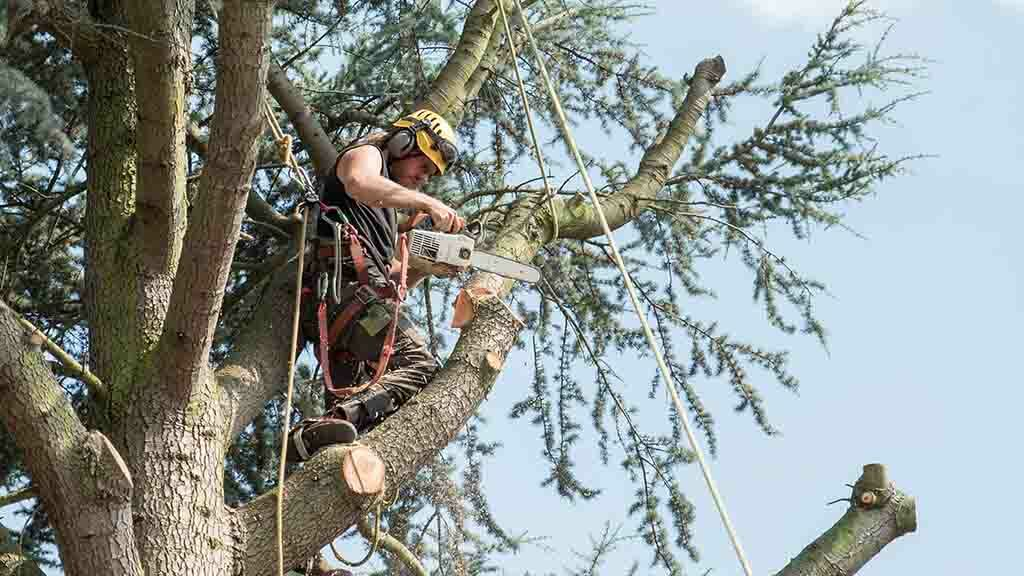 Agriculture looking to UK forestry industry in attempt to turn around safety record