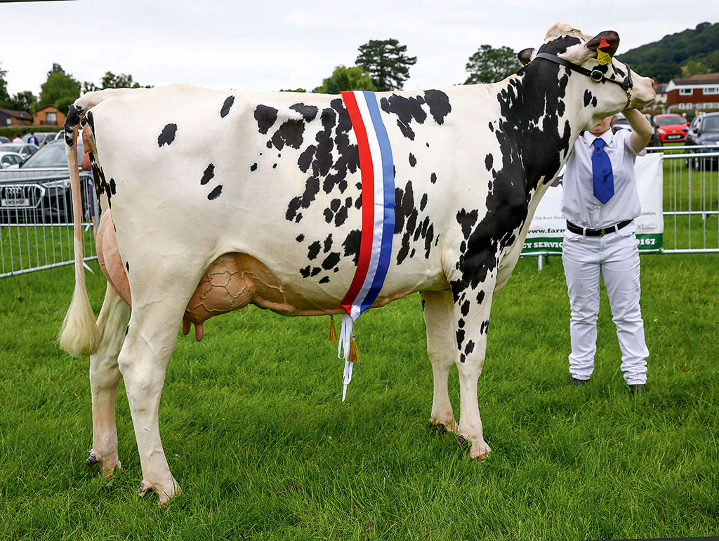 Dairy inter-breed