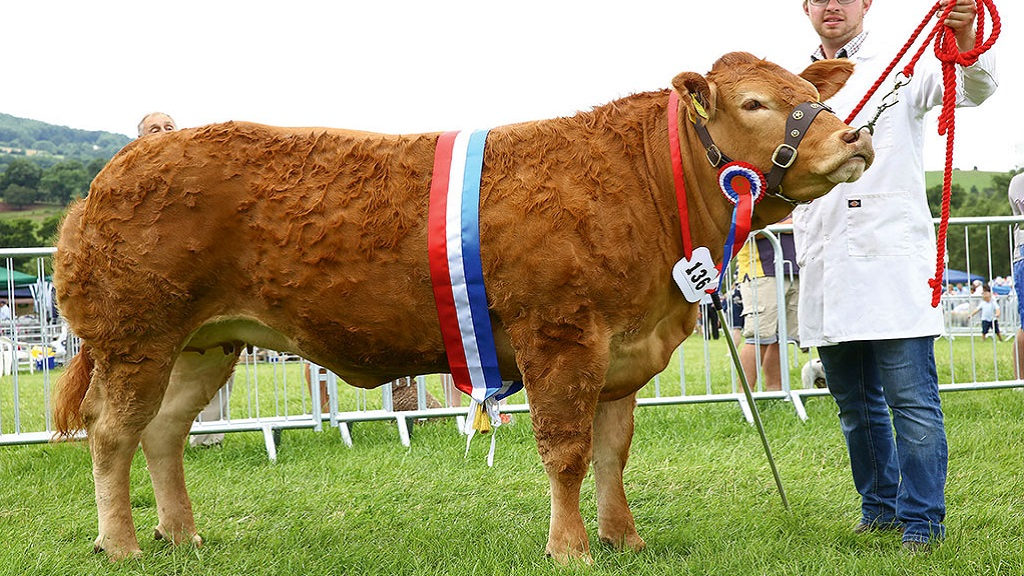 Taygreen Nessie wins at Monmouthshire Show after tie in first line-up