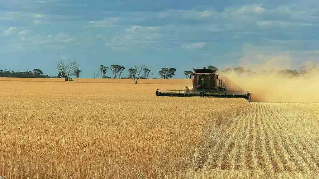 Global Ag View: Australian wheat hit by drought as heatwave cuts crop forecast