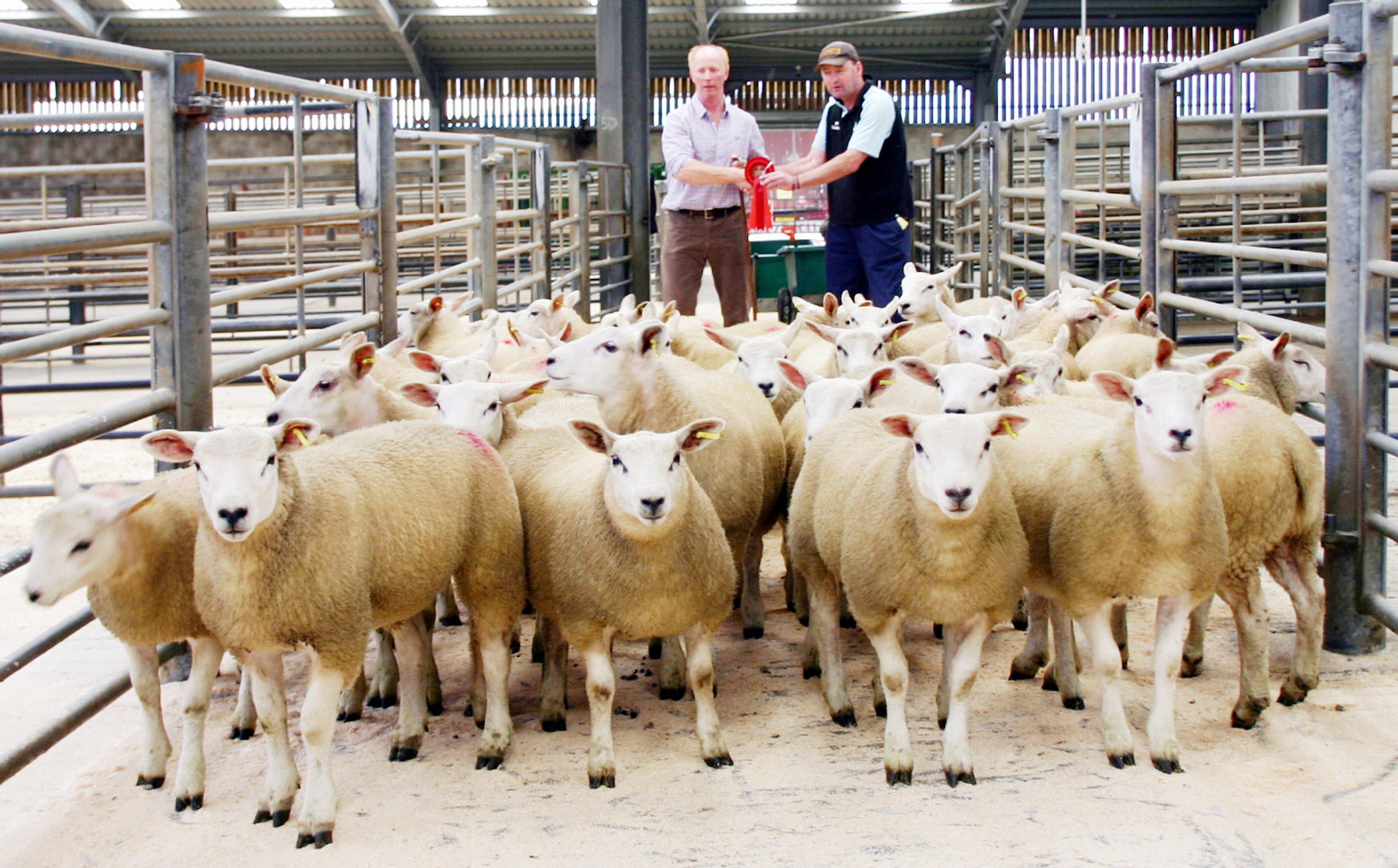 Good start to store lamb sales at Skipton with increases in