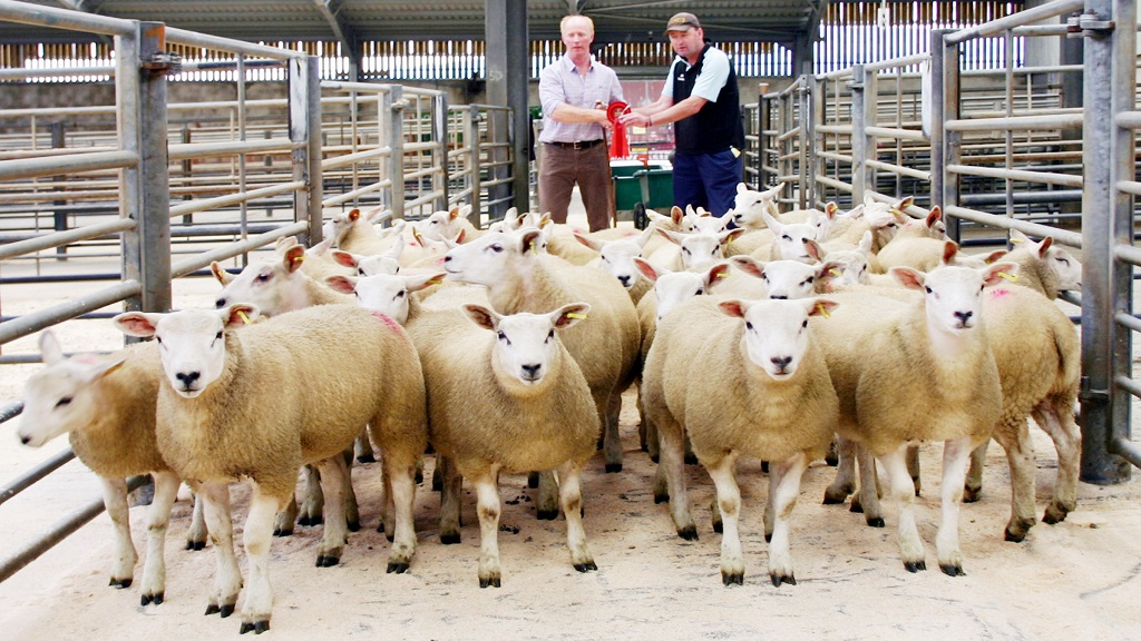 Good start to store lamb sales at Skipton with increases in averages