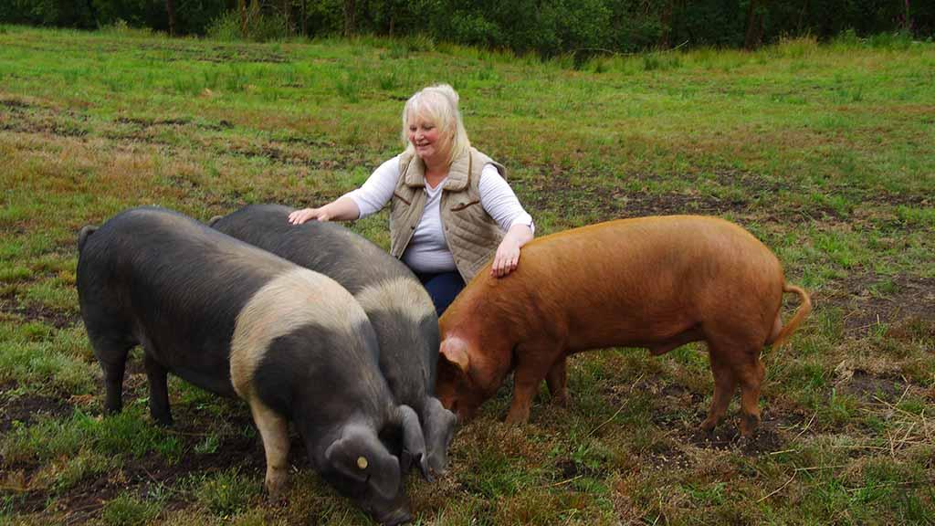 Food focus: Welsh pig farm develops award winning charcuterie
