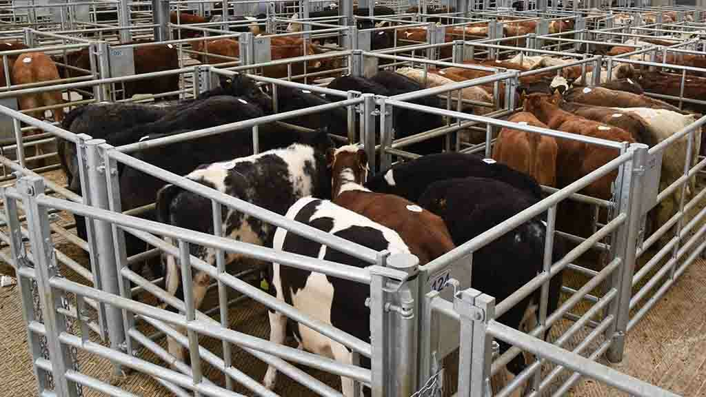 British beef farmers facing 'much more dire situation' than Irish counterparts